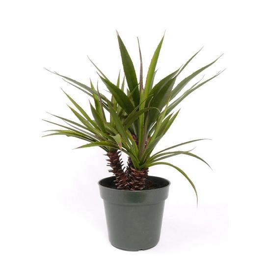 Kunst yucca kamerplant 71 cm FopartikelenWinkel