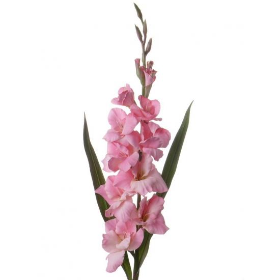Nep gladiool roze 102 cm
