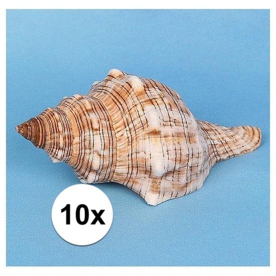 10x stuks maritieme decoraties schelpen 14cm