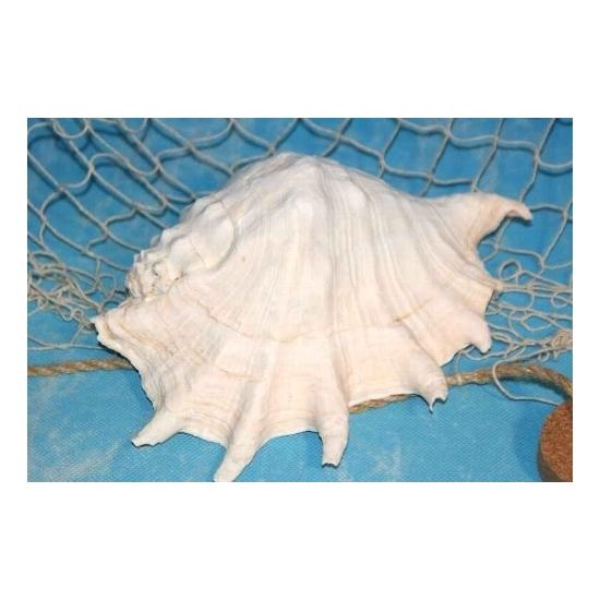 Decoratieve witte schelp 20 cm